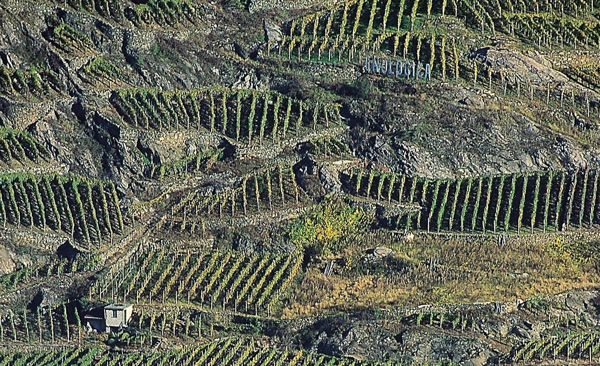 Beeindruckende Sicht von oben auf die Rebanlagen im Valtellina, Unterzone Sassella.