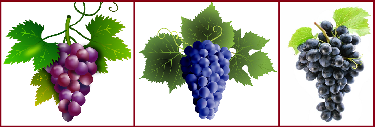 Bunches of red, blue and black grapes