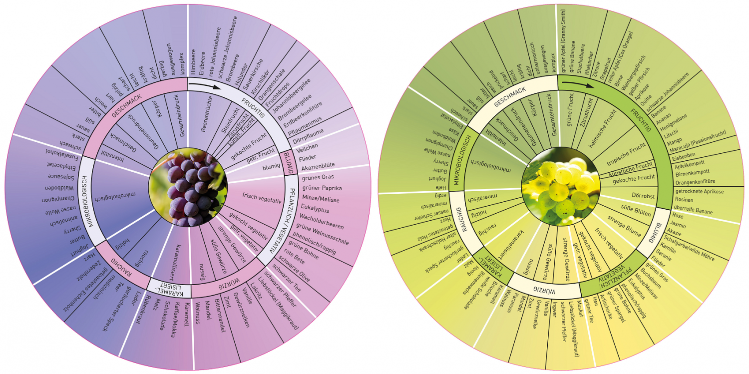 DWI aroma wheel for red wine and white wine