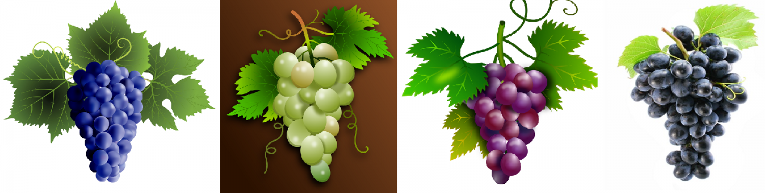 Grapes - blue, white, red, black