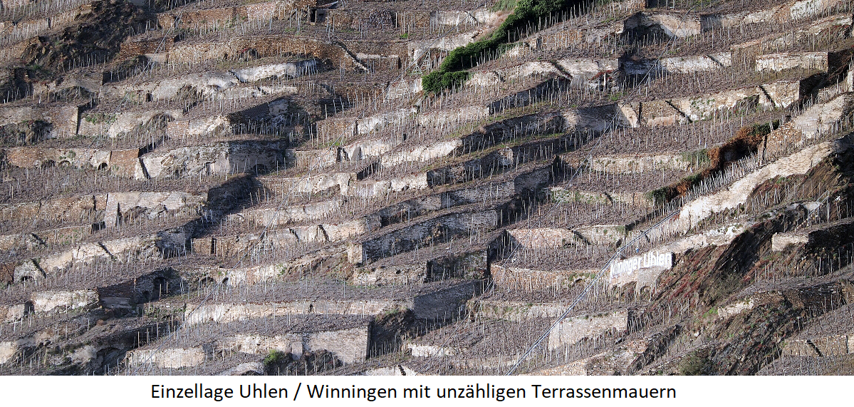 Single layer Uhlen in the municipality Winningen (Mosel)