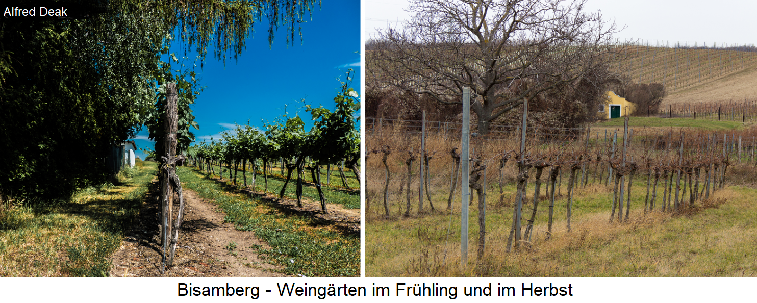 Bisamberg - vineyards in spring and autumn