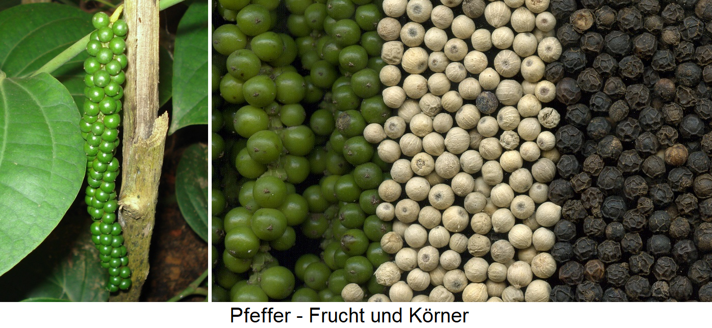 Pepper - fruits and grains in green, white and black