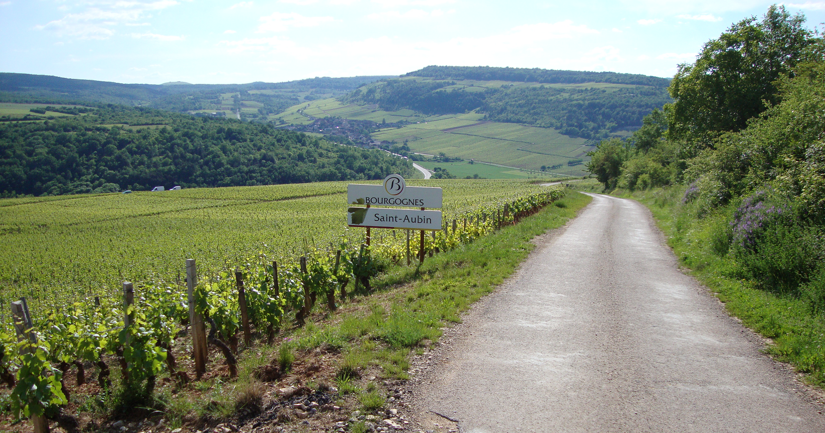Saint-Aubin vineyards