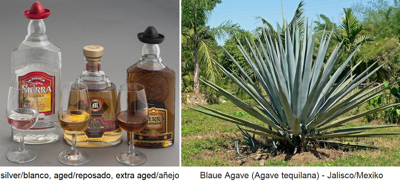 Tequila types: silver / blanco, aged / reposado, extra aged / añejo - Blue Agave (Agave tequilana) - Jalisco-Mexico