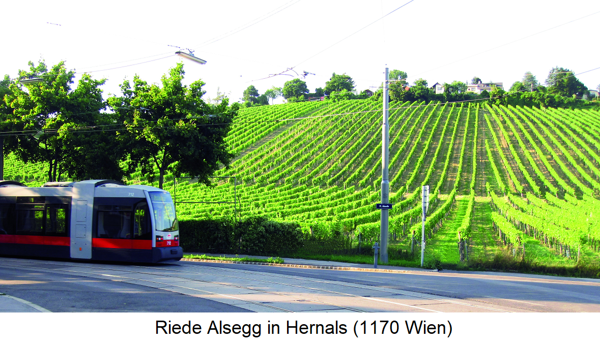 Mayer am Pfarrplatz - Riede Alsegg in Hernals