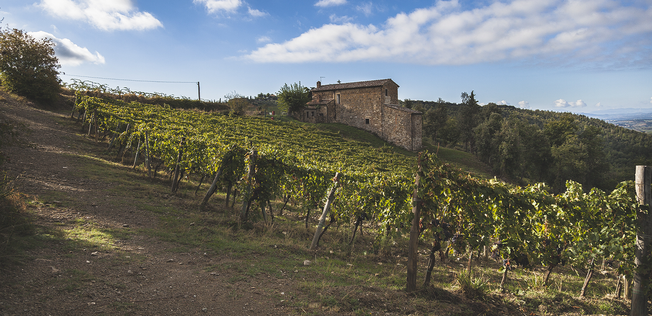 Piemaggio - wineries and vineyards