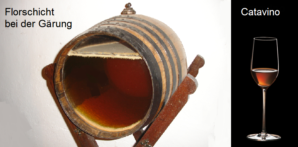Sherry barrel with pile layer and Catavino glass