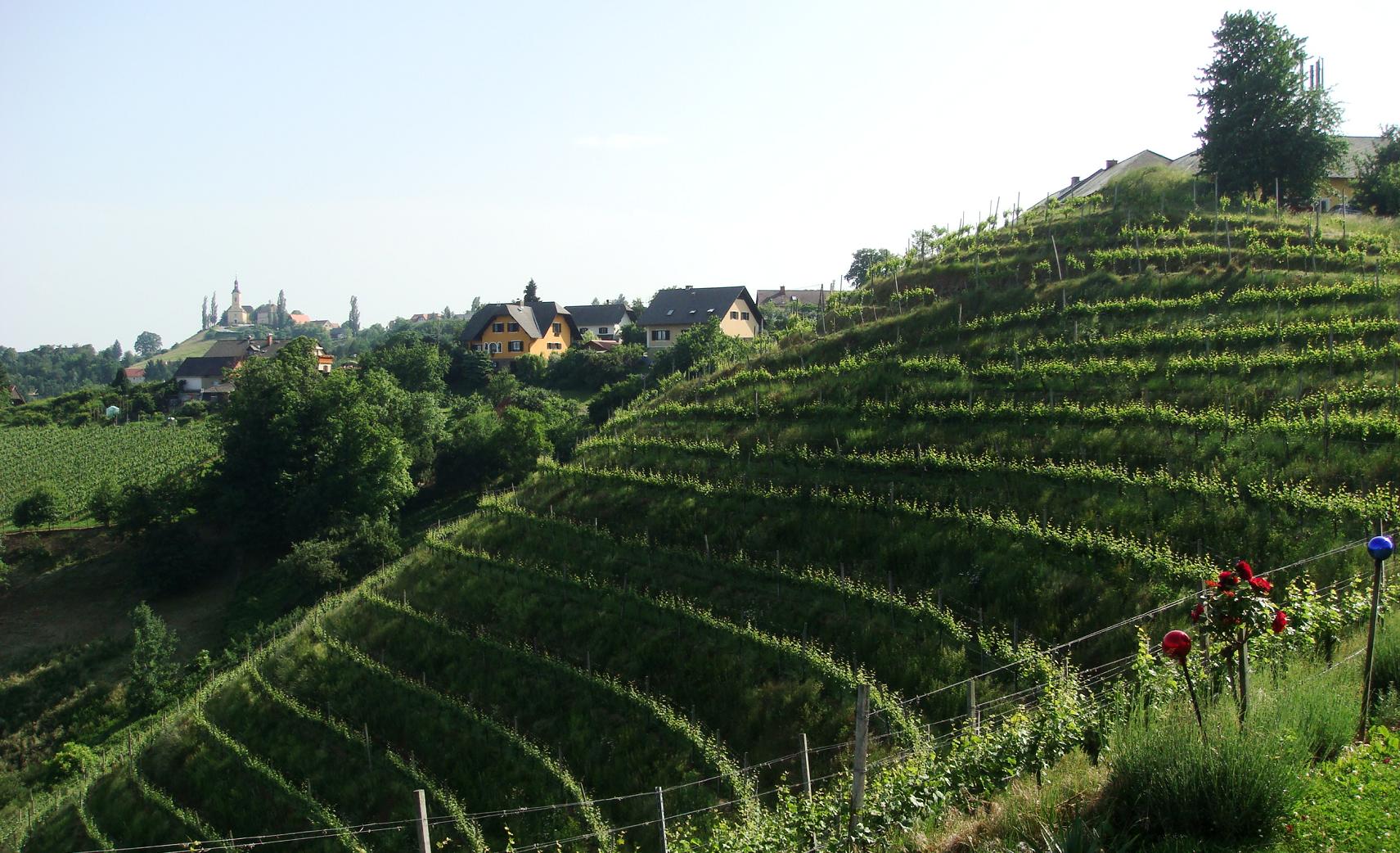 Albert winery - Kramer family - vineyard with winery building