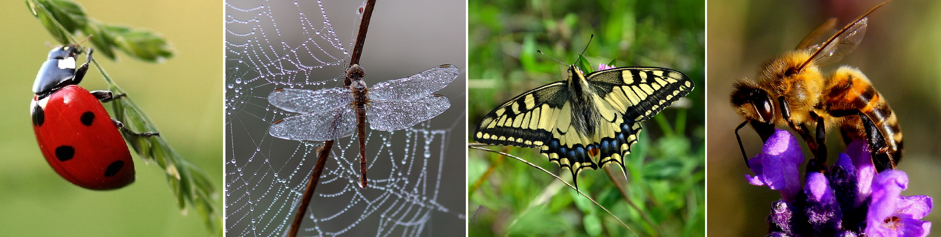 Biodiversity - ladybird, dragonfly, butterfly, bee