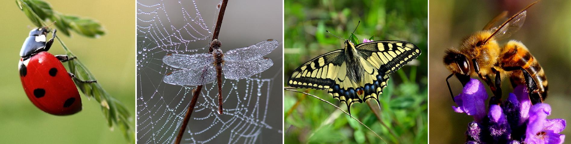 Biodiversität - Marienkäfer, Libelle, Schmetterling, Biene