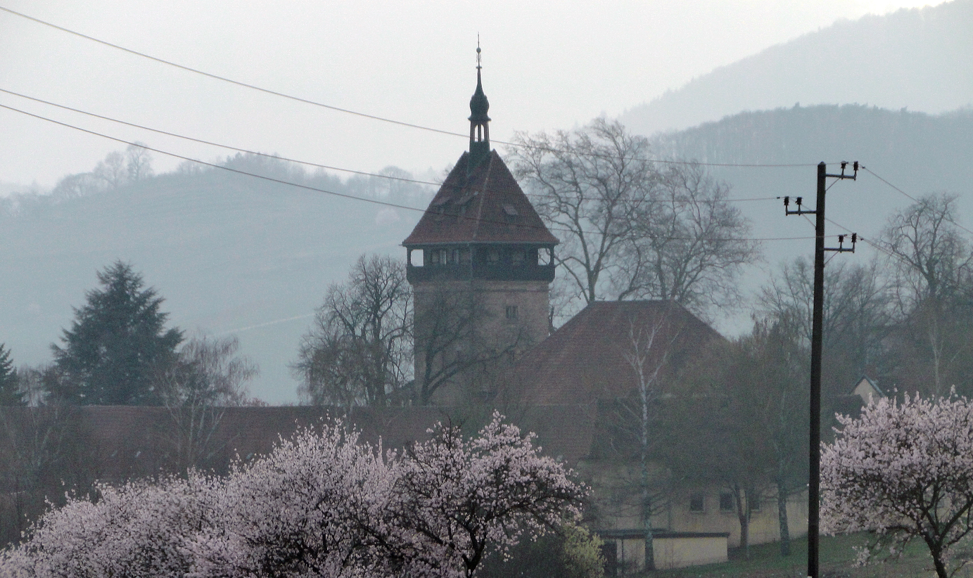 Geilweilerhof - during the almond blossom
