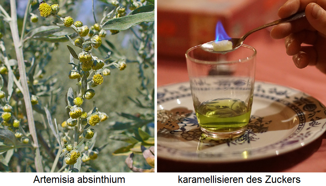 Absinth - Artemisia absinthium and glass with absinthe (caramelizing of sugar)