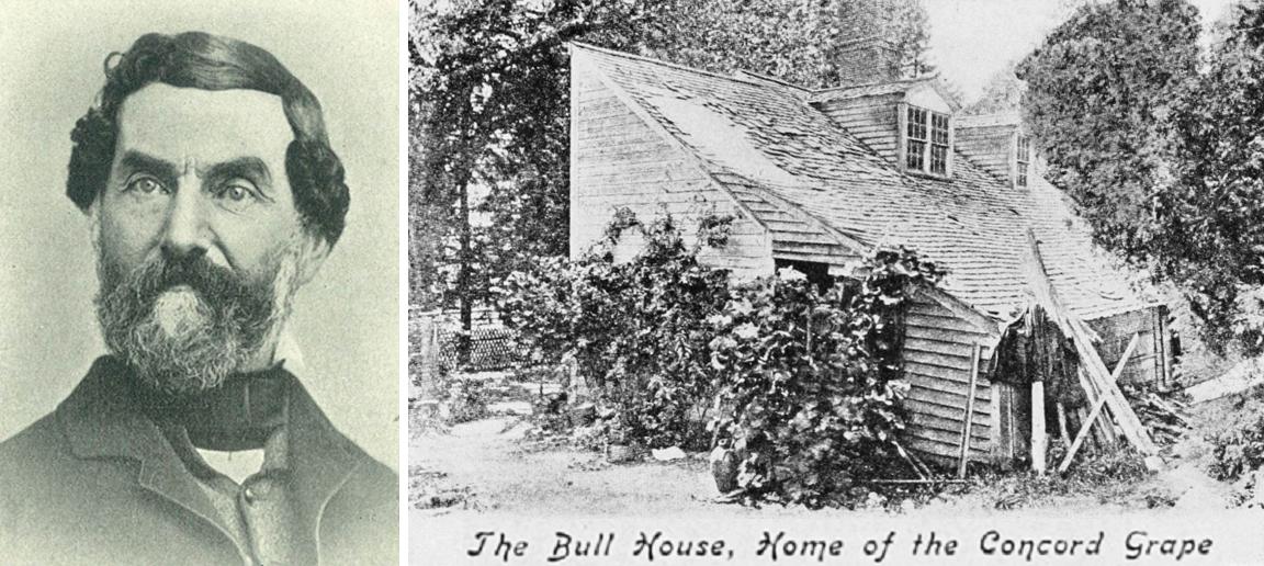 Bull Ephraim - portrait and house