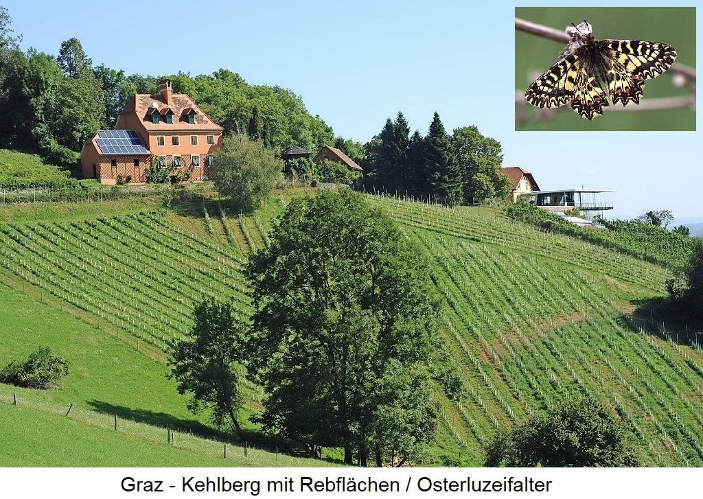 Graz - Kehlberg with vineyards and Osterluzeifalter