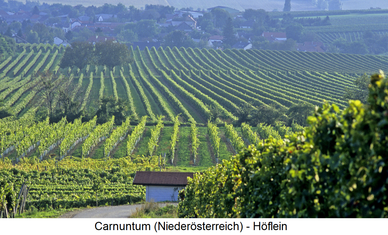 Carnuntum - municipality Höflein with vineyards