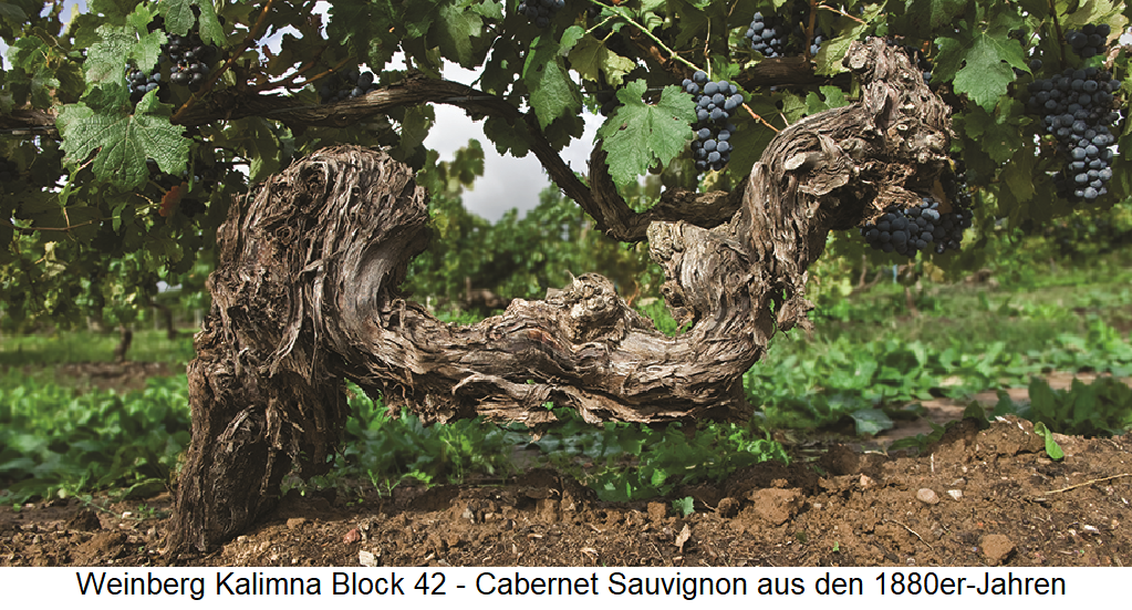 Penfolds - Kalimna Block 42 - old vine Cabernet Sauvignon from the 1880s