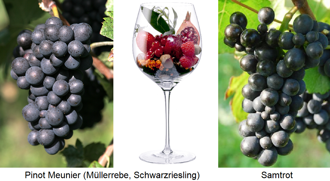 Pinot Meunier grape - aromas in glass - velvet vine grape
