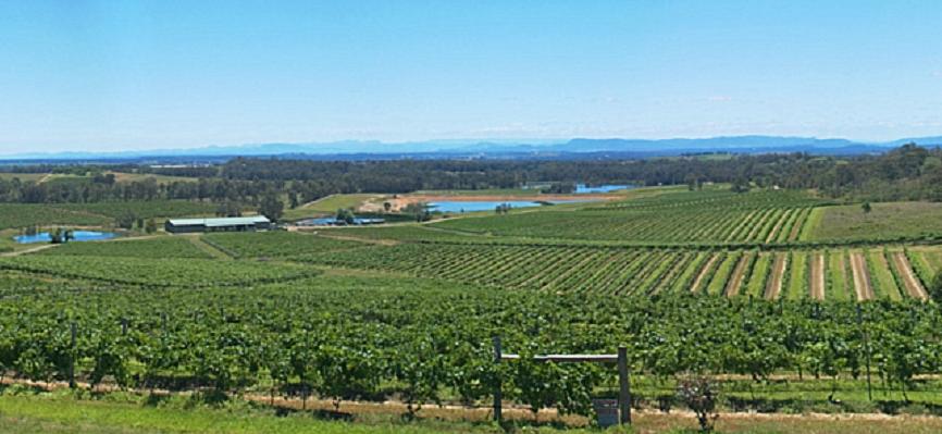 Hunter Valley - vineyards
