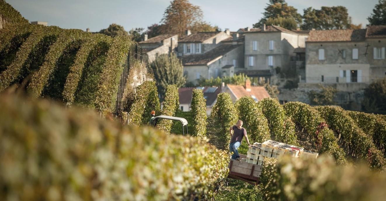 Château Ausone - vineyards