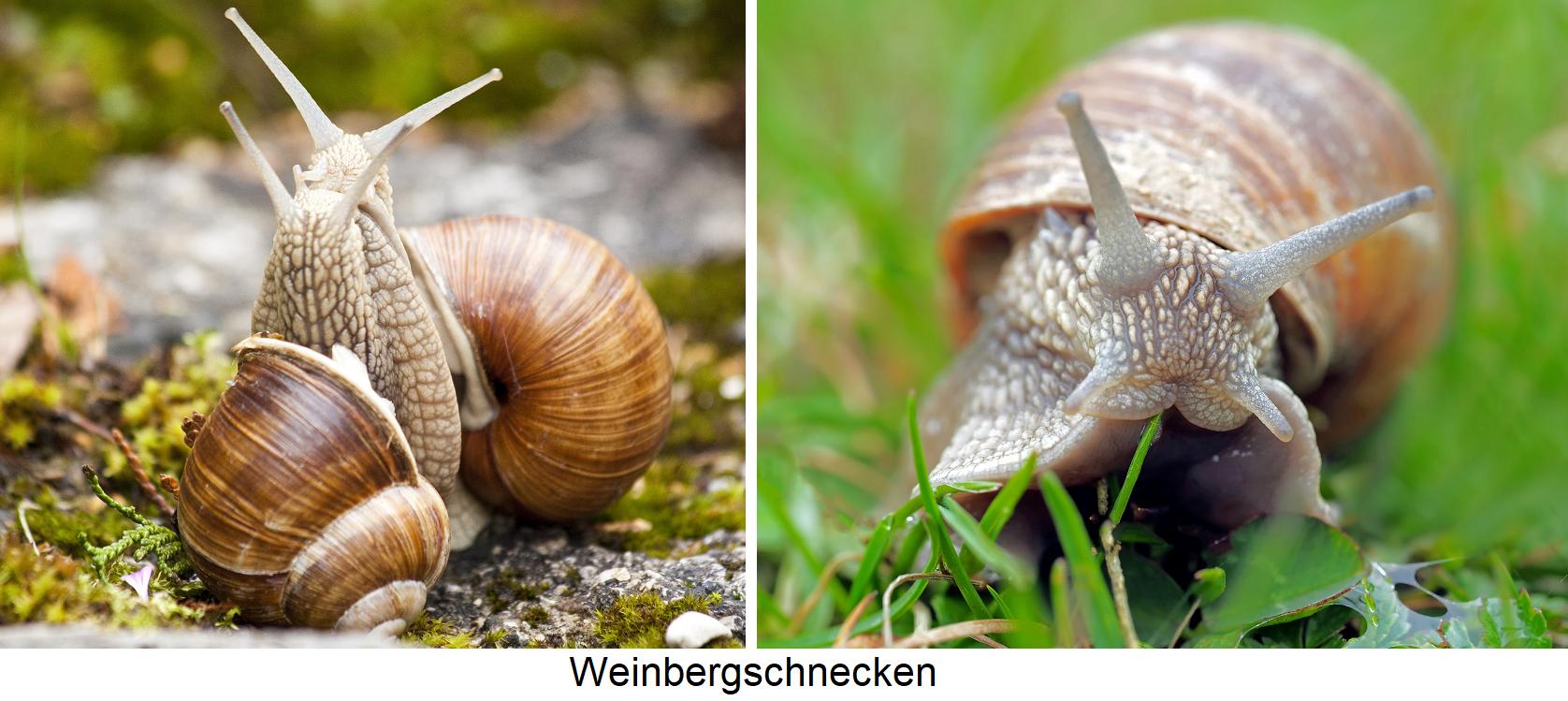 Snails - snails