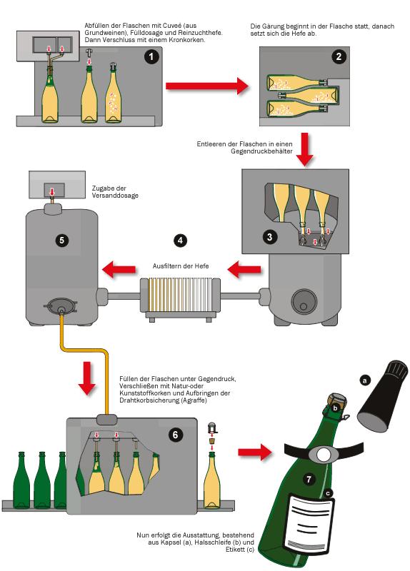 Transvasation process - graphics