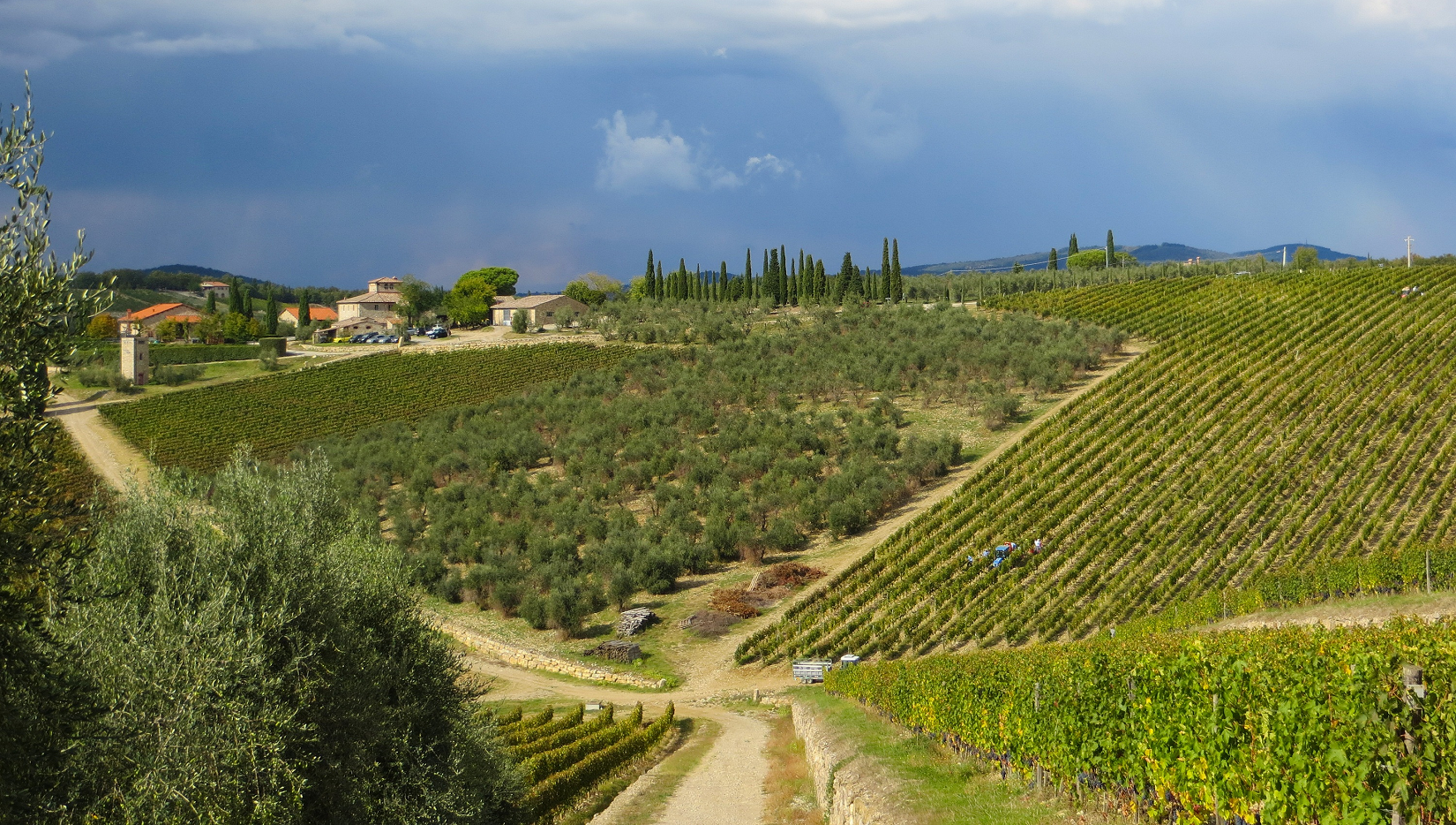 Chianti - vineyards
