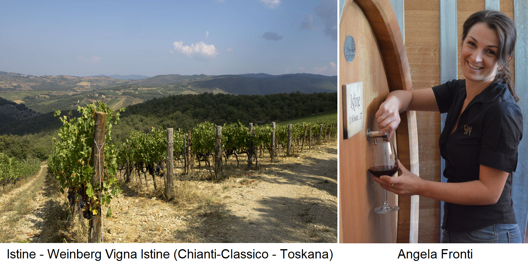 Istine - vineyard Vigna Istine (Chianti-Classico in Tuscany) and Angela Fronti