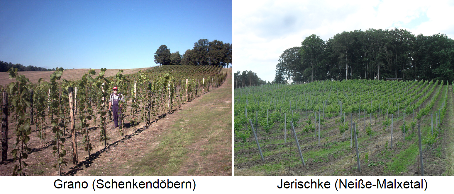 Brandenburg - Vineyards in Grano (Schenkendöbern) and Jerischke (Neisse-Malxetal)