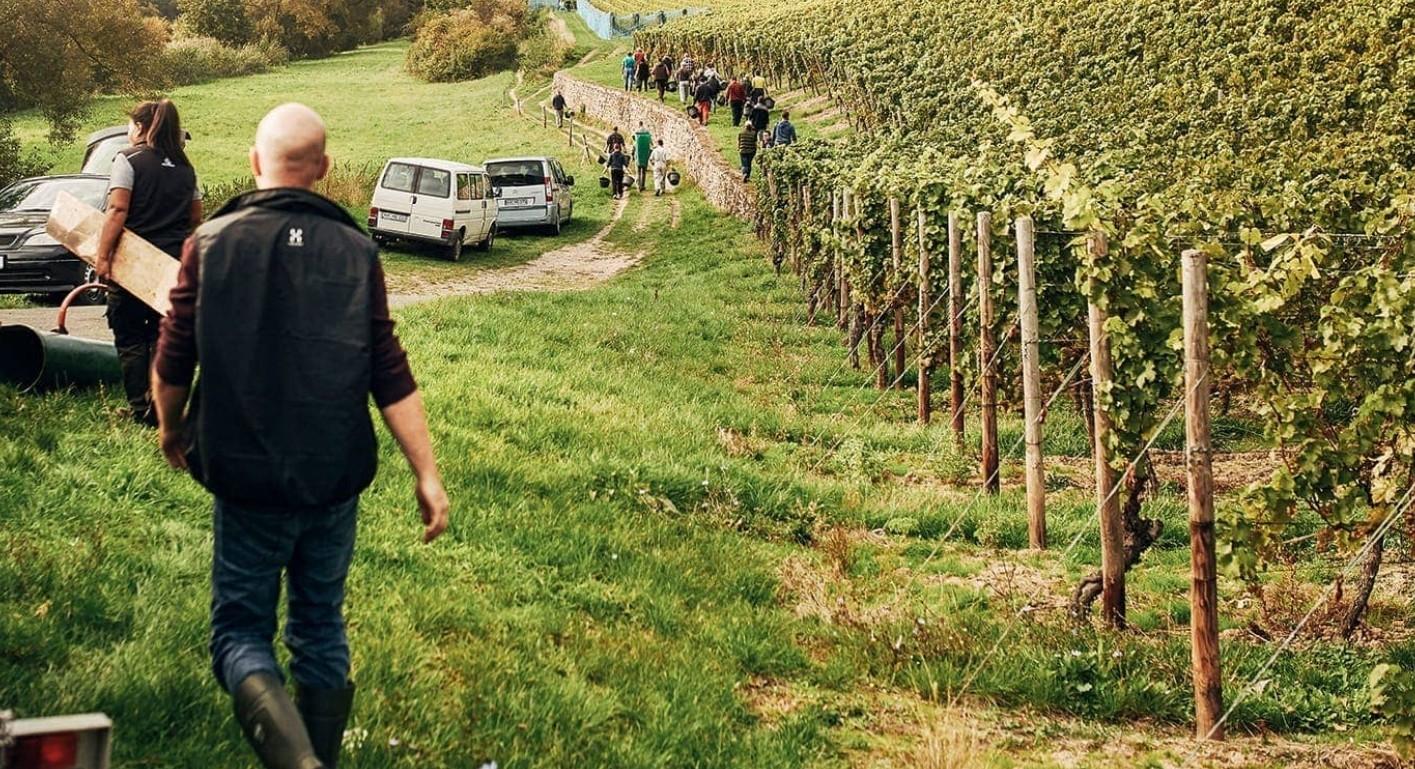 Dönnhoff Hermann - Working in the vineyard