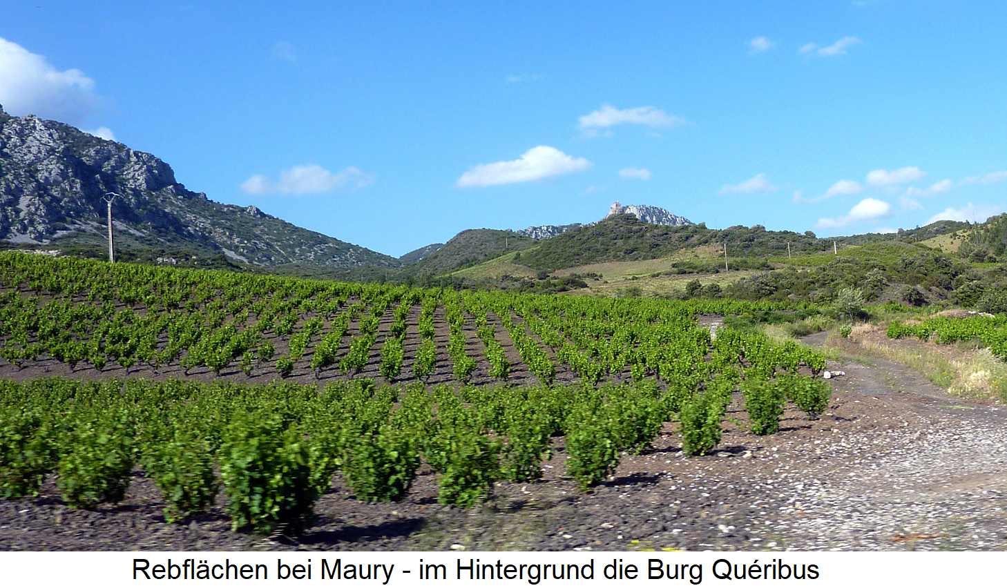 Maury - vineyards - in the background the castle Quéribus