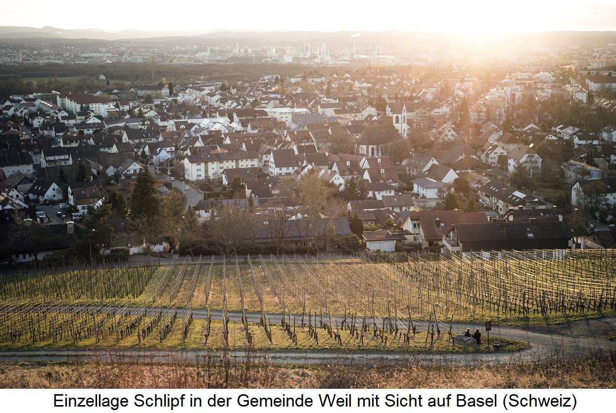 Schneider Claus - Einzellage Schlipf (Weil) mit Blick auf Basel