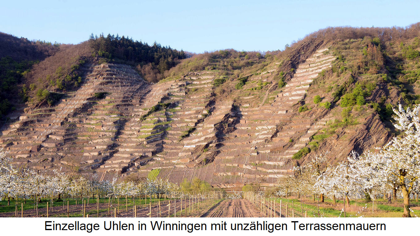 Single layer Uhlen in Winningen with countless terrace walls