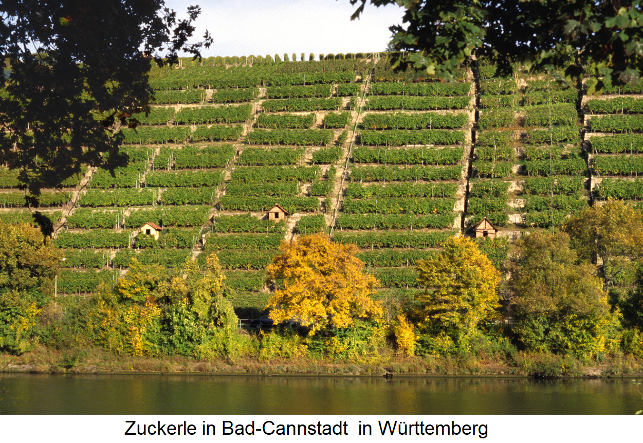 Slope - single layer Zuckerle - community Bad-Cannstadt in Württemberg with terraces