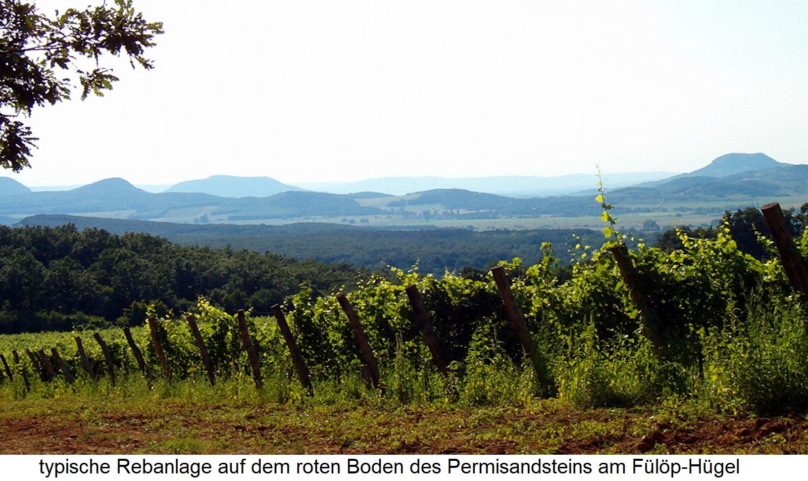 Balatonfelvidßek - typical vineyard on the red soil of the Permisandstein at the Fülöp hill
