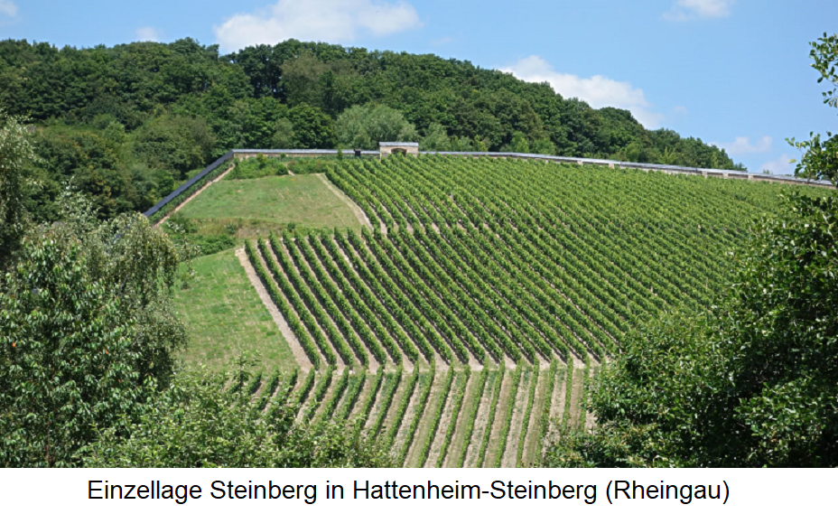Steinberg - single location in Hattenheim-Steinberg (Rheingau)