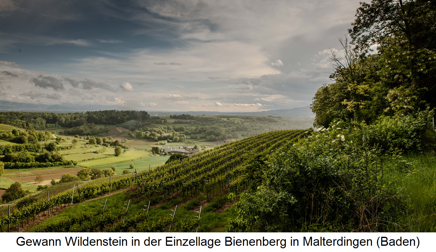 Bienenberg - Gewann Wildenstein in single vineyard Bienenberg in Malterdingen (Baden)