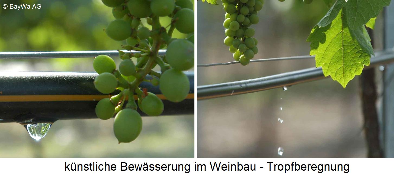 Irrigation - drip irrigation