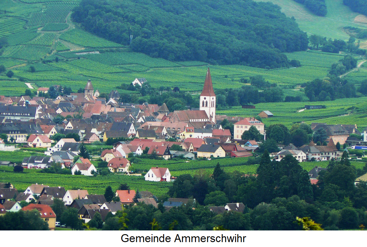 Kaefferkopf - municipality of Ammerschwihr with vineyards