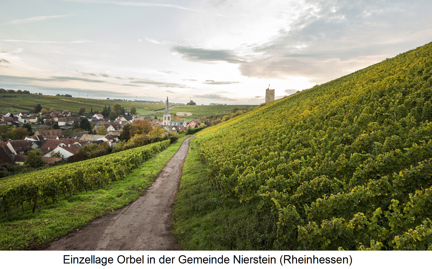 Orbel - vineyards