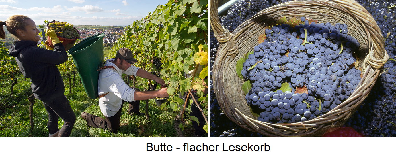 Butte - scene in the vineyard and flat reading basket