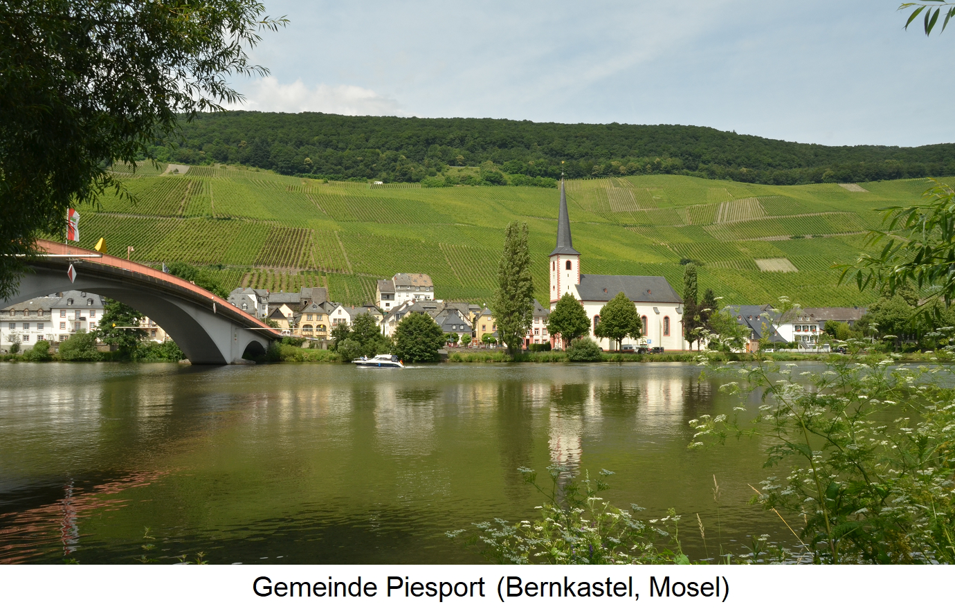 Gold droplets - community Piesport (Bernkastel, Mosel)
