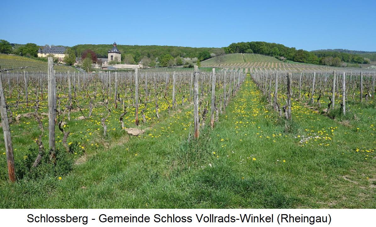 Schlossberg - Commune Schloss Vollrads-Winkel (Rheingau)