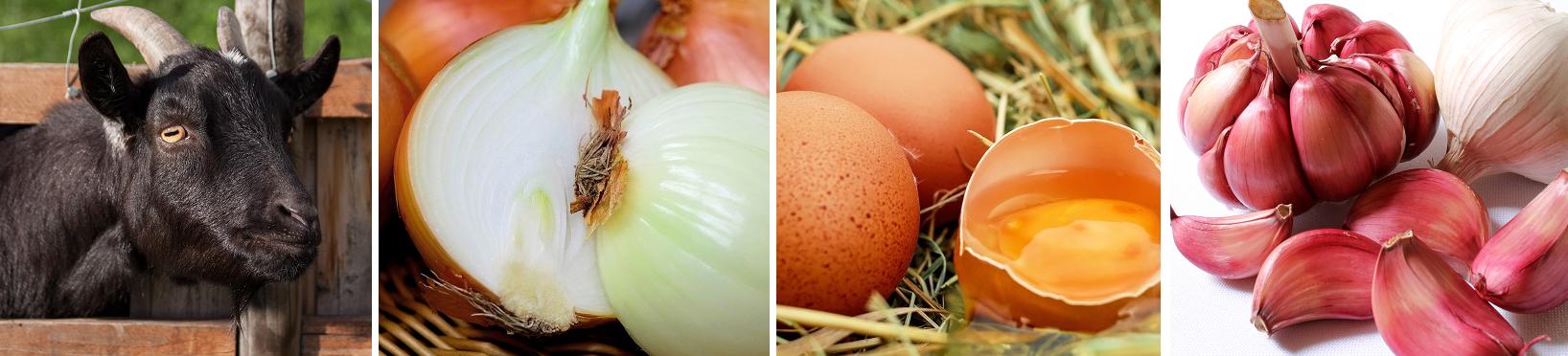 Billy goat, onion, rotten egg, garlic