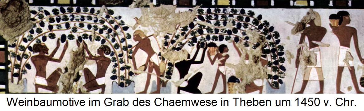 Mural in the tomb of Chaemwese in Thebes around 1450 BC Chr. With Weinbaumotiven
