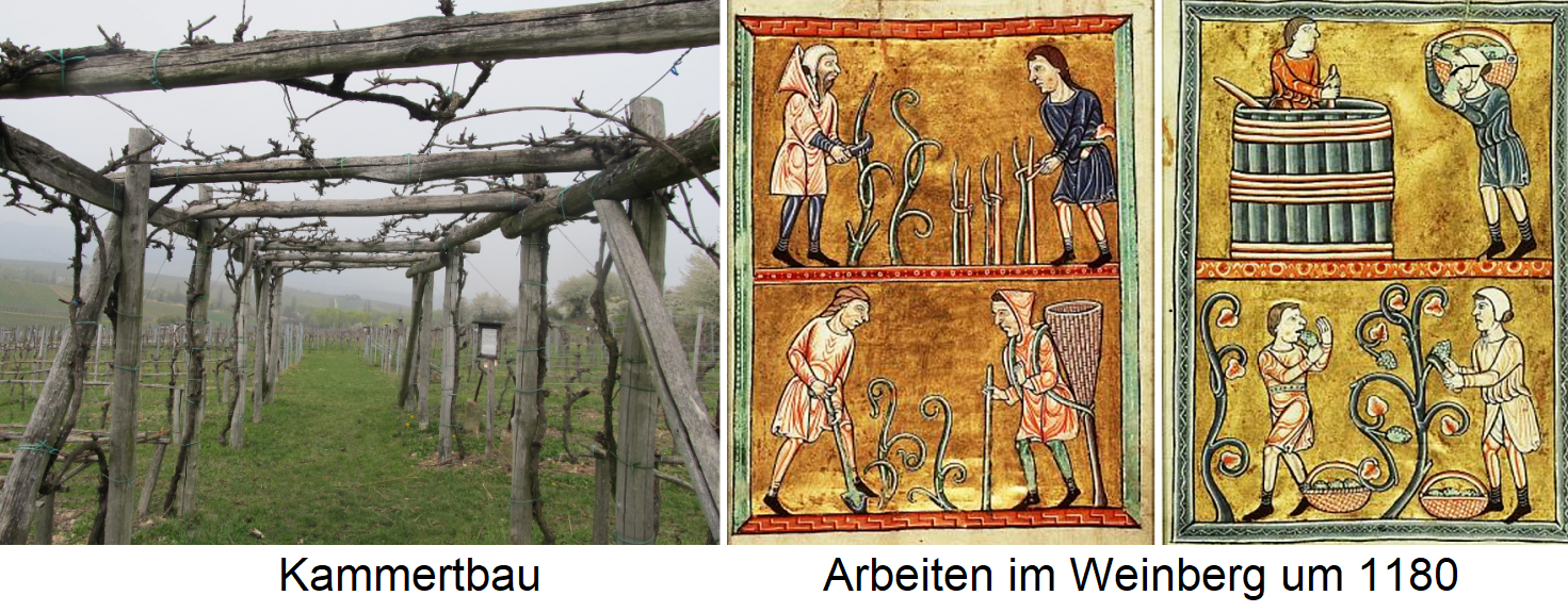 Form of education - chamber building and work in the vineyard around 1180