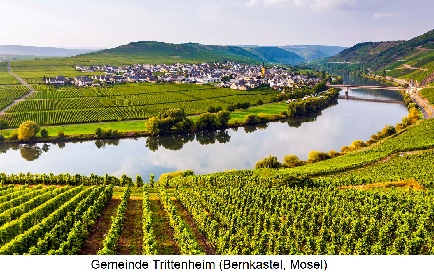 Vineyard maintenance - Vineyards in the municipality of Trittenheim (Bernkastel, Mosel)