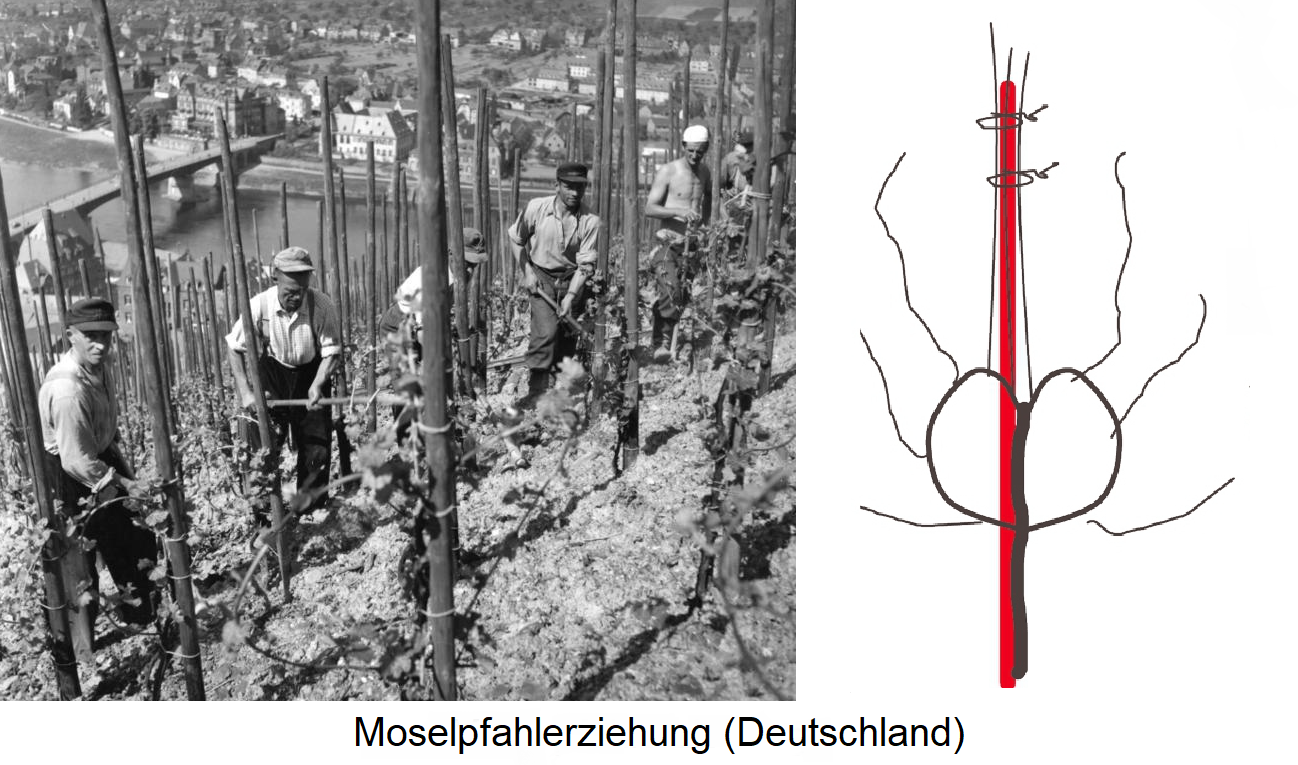 Moselle pile education (Germany)