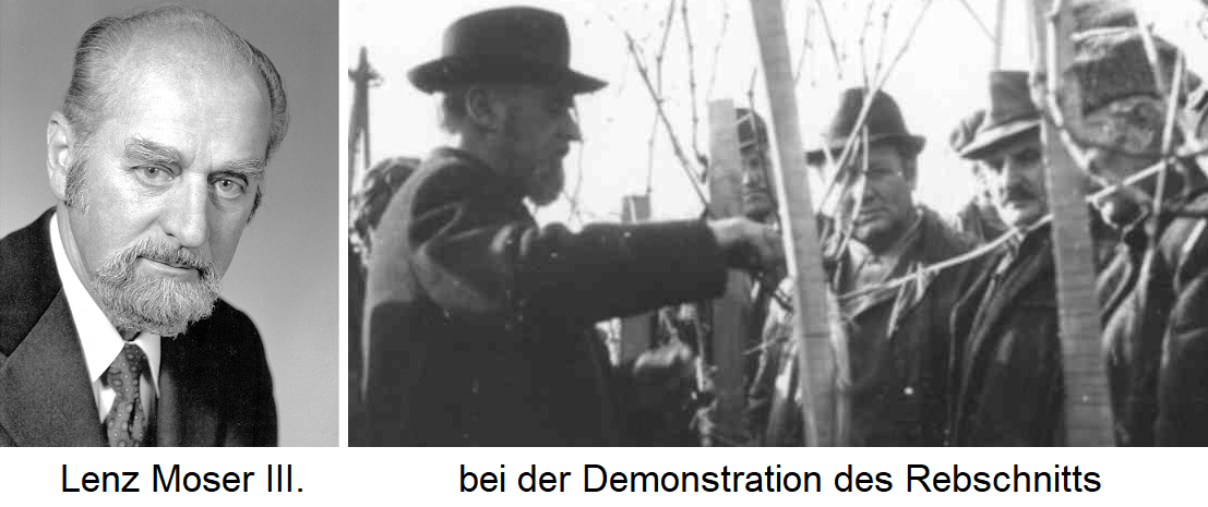 Lenz Moser III. and demonstration of pruning
