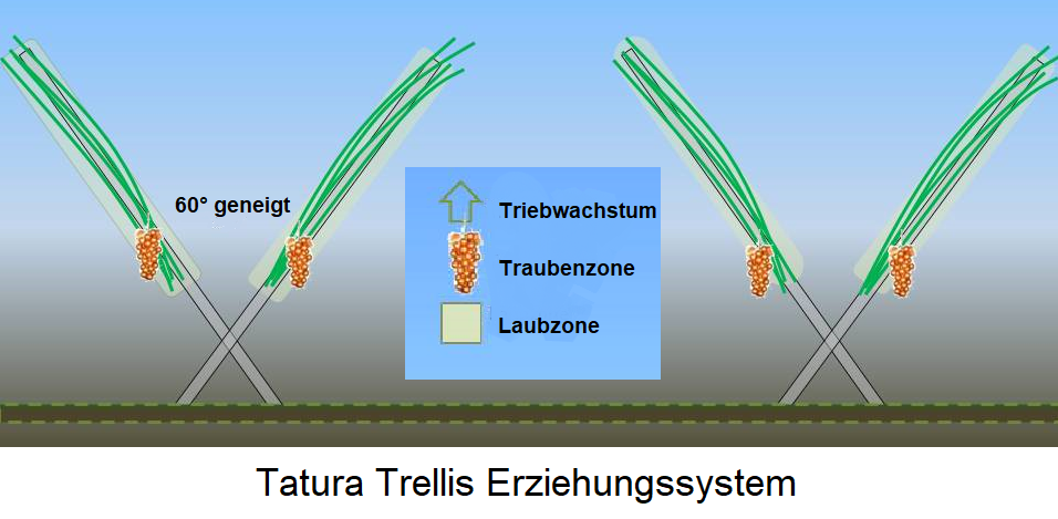 Tatura Trellis education system